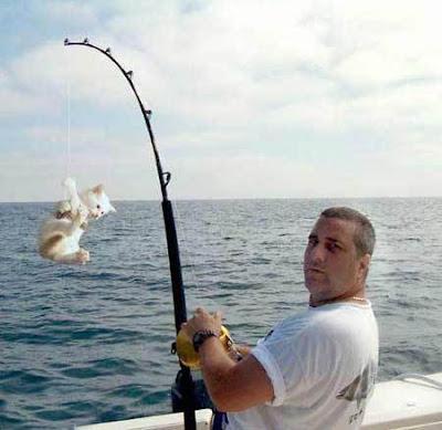 [Image: cat_catching-1.jpg]