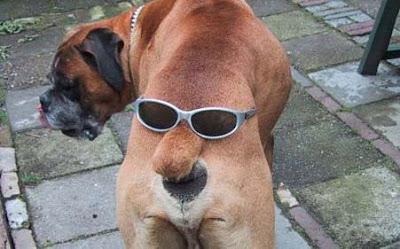 [Image: 205-cooldog2.jpg]