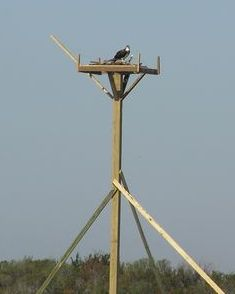 OSPREY PLATFORM on Carrot Island