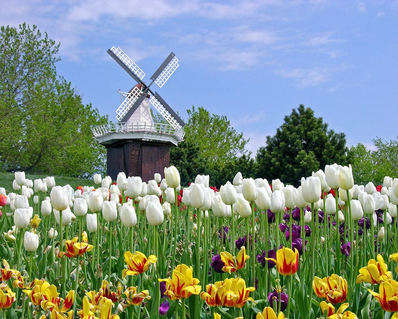 http://3.bp.blogspot.com/_6Ks7mquN8BQ/TMvbxibv7QI/AAAAAAAAAVE/wCKDmxL2Lgs/s1600/lalele_holland-tulip-wallpaper.jpg