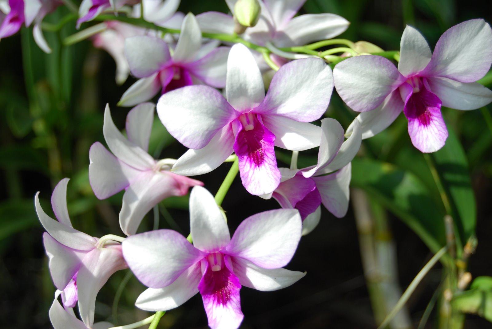 http://3.bp.blogspot.com/_6Ks7mquN8BQ/TN0GschCybI/AAAAAAAAAbs/xSJjApGwZZ4/s1600/Orchid_i.JPG