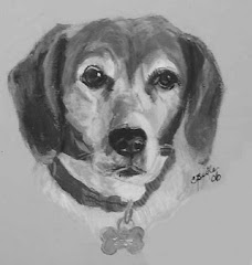 Older Beagle in Black and White
