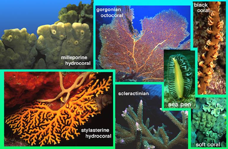 Kayleigh dean cg arts blog creating a coral reef different types of coral publicscrutiny Images