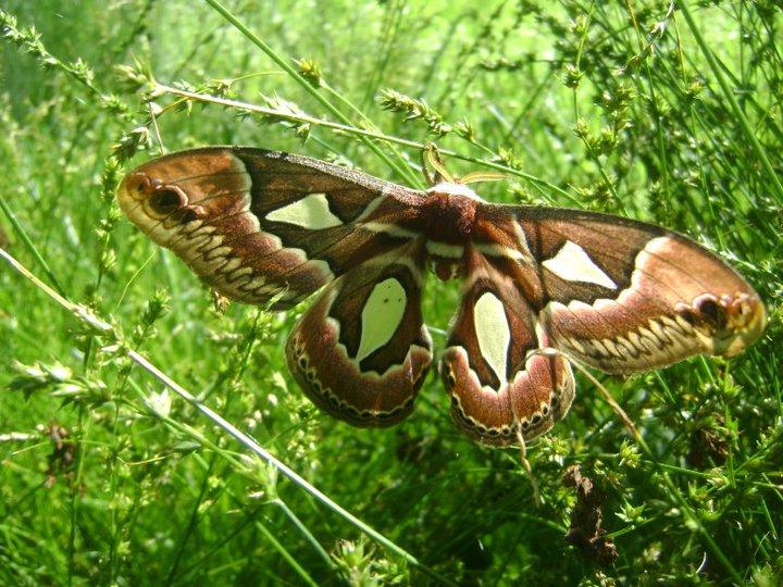Con plantas nativas, vuelven las mariposas a tu barrio: Nuevo ...