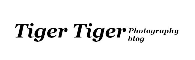 Tiger Tiger blog