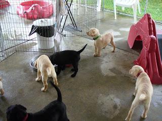 Puppy Park 1