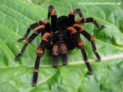 [tarantula2_1024.jpg]