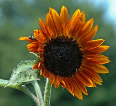 a wasper admires an orange beauty
