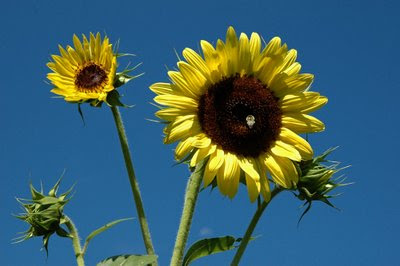 a yellow pair grin at the blue sky