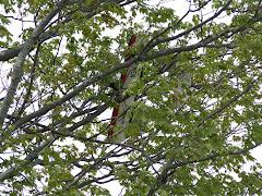 Deans Tree Landing