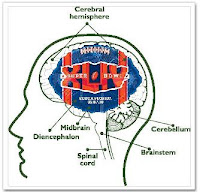 Gambler's Brain