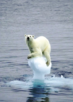 Where Do Polar Bears go to Dance? ~ Snowballs!
