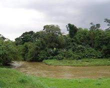 Batang Muar