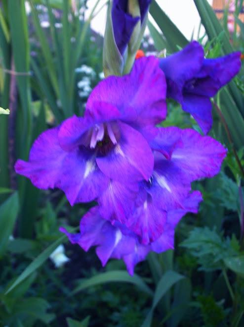 """""""Ser superado pela fragrância das flores é uma forma deleitável de derrota."""""""