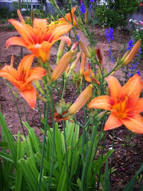 """""""É uma pena que o amor seja como as flores; tanto valor e tanta beleza para uma vida efêmera."""" (Bru"""