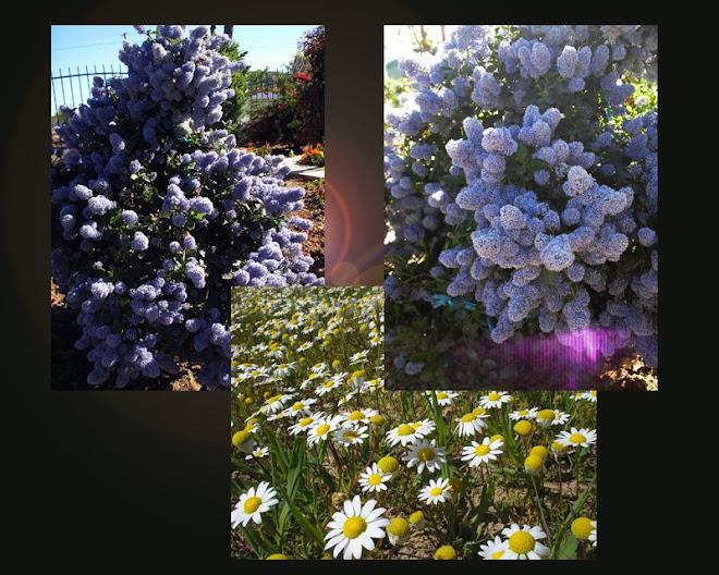 """""""Ser superado pela fragrância das flores é uma forma deleitável de derrota."""" (Beverly Nichols)"""