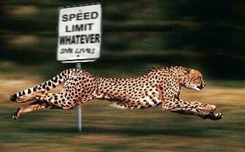 Cheetah quotes - photo#16