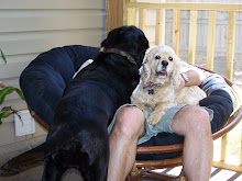 Maggie and Tillman ask Daddy where in this chair will Baby Meece fit??