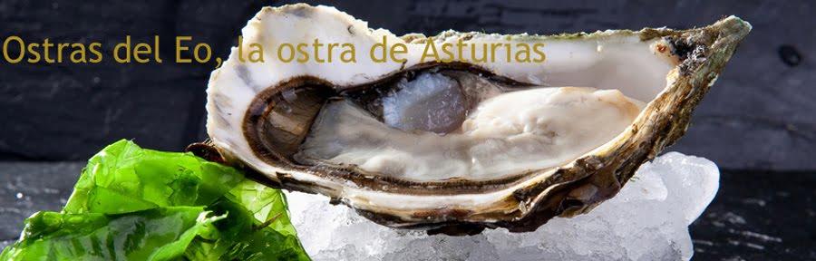Ostra del Eo, la ostra de Asturias