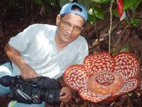 Rafflesia/ Pakma