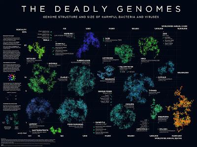 http://3.bp.blogspot.com/_6RbZKweOfIY/TIABOVQ_vyI/AAAAAAAAAhk/Qk304HEIsqE/s1600/Deadlygenomesvirus.jpg