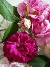 Rosor från trädgården