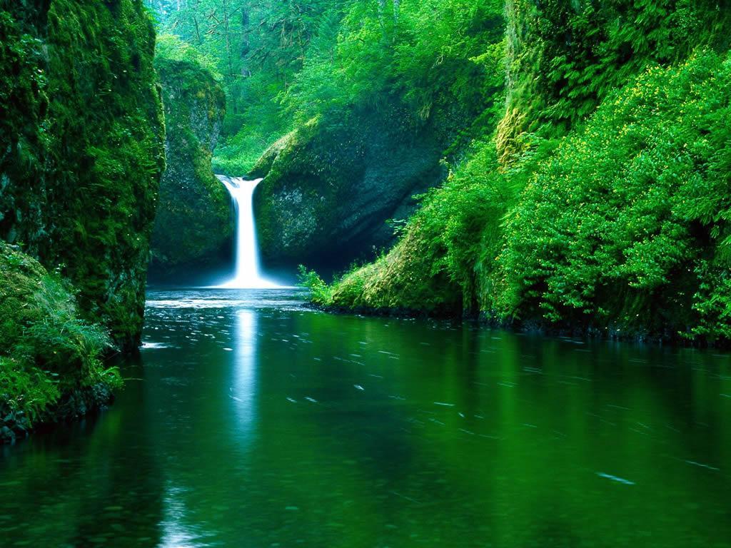 http://3.bp.blogspot.com/_6SoSz6qNt4E/TMLGfjOnF-I/AAAAAAAAEJo/-B55C0HKzgQ/s1600/imagini-desktop-wallpapers-cascada-in-jungla.jpg