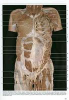 Скачать Атлас Анатомии