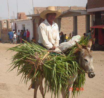 LA FAMILIA MICHOACANA SE VA? Campesino+y+Burro