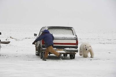 piada   , emprego   , alaska   , qualificacao   , chance   , vida  , urso   ,