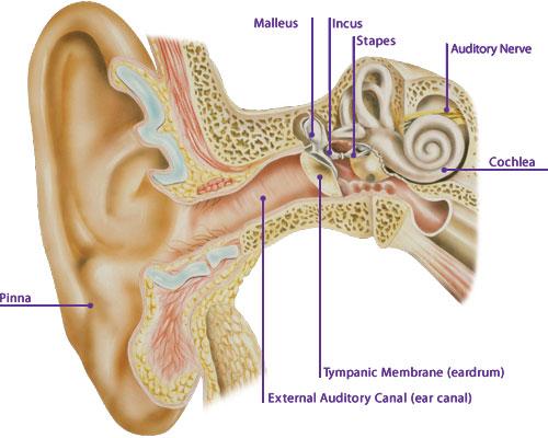 Tips Membersihkan Cerumen Pada Lubang Telinga [ www.BlogApaAja.com ]