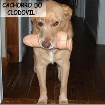 Cachorro de viado