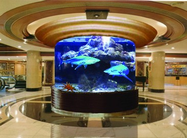 Glass And Acrylic Fish Tanks Tropical Fishes And