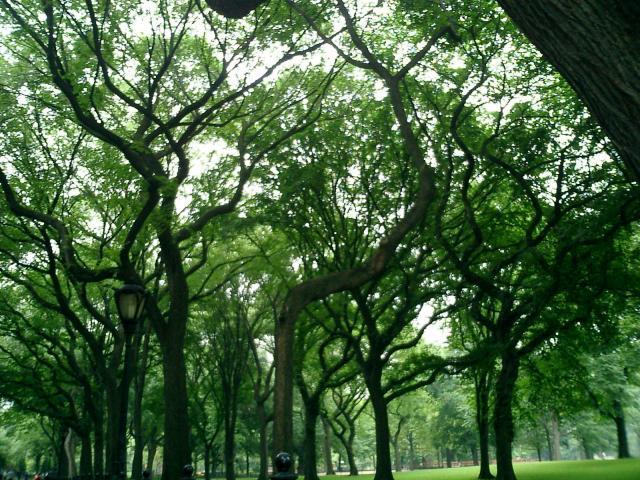 ENTOURAGE  TREES