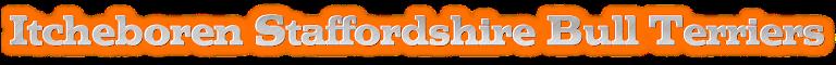 Itcheboren Staffordshire Bull Terriers