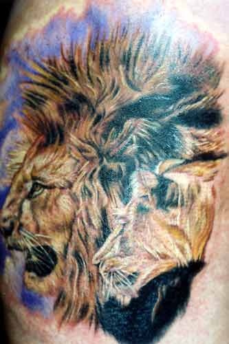 tiger tattoos on calf. Tiger Animal Tattoo Design