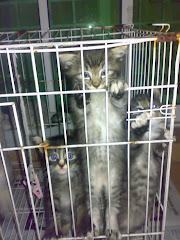Gemoks kitten