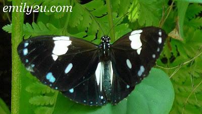 polkadot butterfly