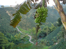 Platanos and Colombian Scenery