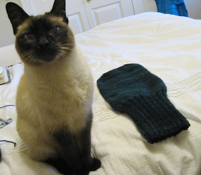 Cat and Mitten