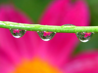 pink flower and waterdrops