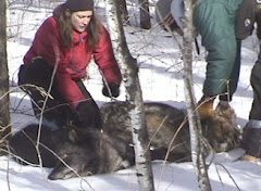 Wolf captures