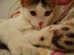 MC nosso gatinho pelúcia