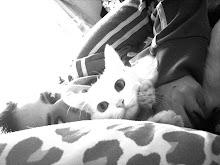 Minha turminha Felina!!!