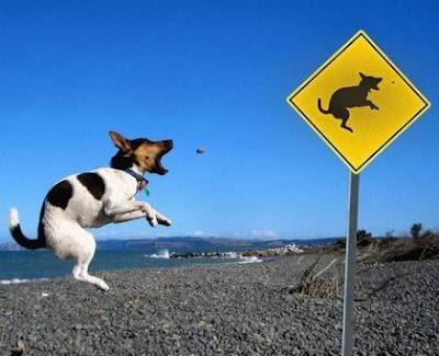 funny dog-2
