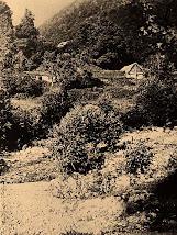 ჩარგლის ხედი
