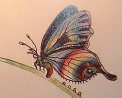 nabokov butterfly sketch