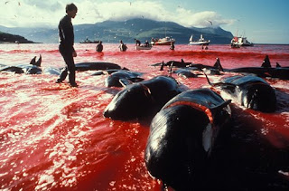 whaling sea blood