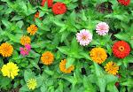 - I Love...Gardening -