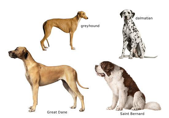 Dog Care Training: America's Favorite Dog Breeds